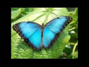 Crazy Town - Butterfly HD