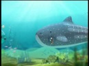 The Octonauts S01 - E01 The Whale Shark / E02 The Undersea Storm