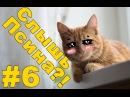Приколы видео про животных 2015 | Кошки и собаки.