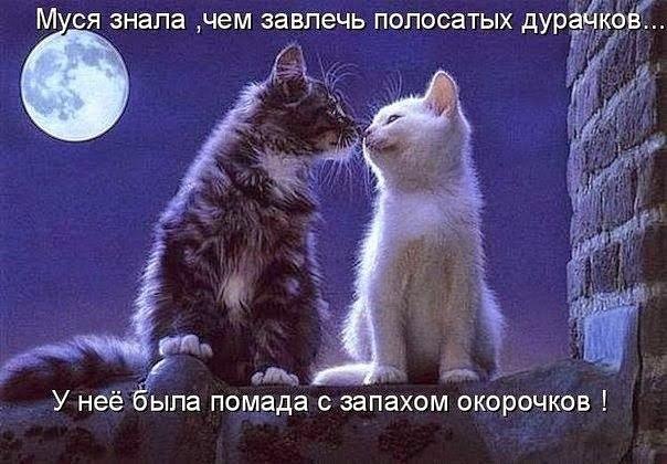http://cs625219.vk.me/v625219257/39677/6ClJs-Rjp40.jpg