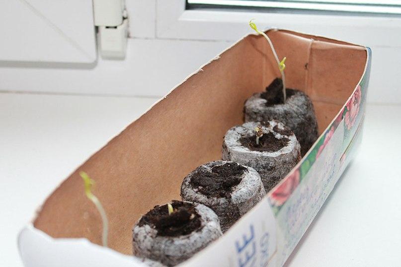 Перцы - как вырастить хороший урожай перцев