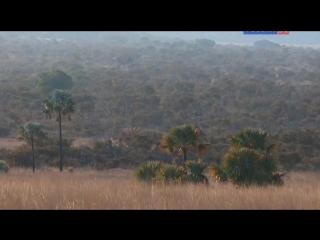 Мадагаскар. Зеленые сокровища Красного острова (2014)