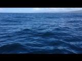 Фото-охота на китов. Залив Самана, Доминикана