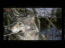 ВОЛКИ. клип про волков