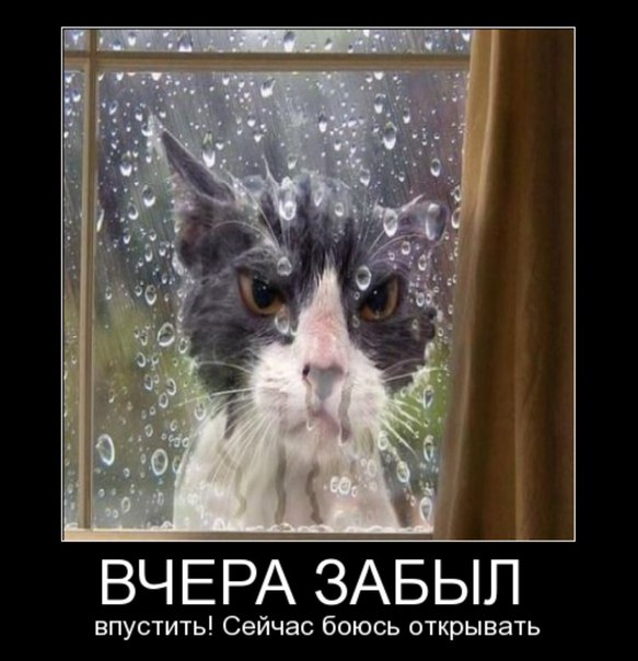 http://cs625220.vk.me/v625220053/55561/hj0XcXOQbAw.jpg