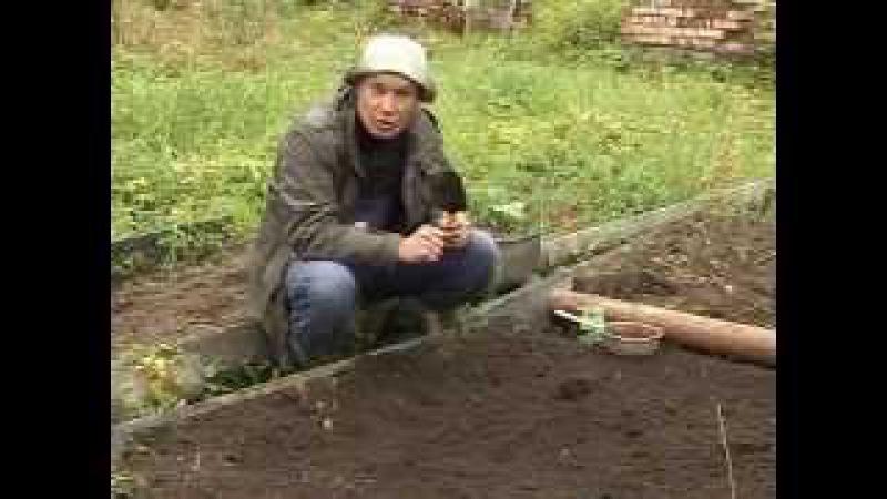 Как вырастить артишок на своем огороде. Разновидности и способы ухода