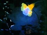 Fantasia - Dance Of The Sugarplum Fairy (Tchaikovsky) - Disney