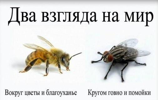 https://pp.vk.me/c625221/v625221813/10f0a/k8yHywcJFDo.jpg