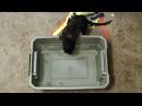 Норка, освобождённая с меховой зверофермы, впервые узнаёт, что такое вода