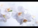 БГ+Аквариум - Капитан Белый Снег  КЛИП HD