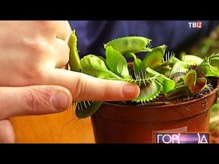 Новости - В Аптекарском огороде появились плотоядные растения