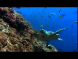 Тайны подводного мира Камиль Сен Санс Аквариум