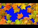 Осенние Листья Переходы. Футажи для видеомонтажа. С 1 сентября. Футажи на хромакее