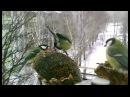 Птицы - Развивающая презентация для детей. Карточки Домана.