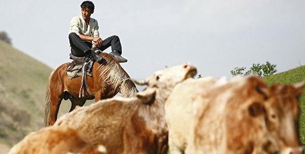 Калмыцкий скот разводят монгольские кочевники