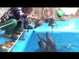 Дельфины и поющие чаши