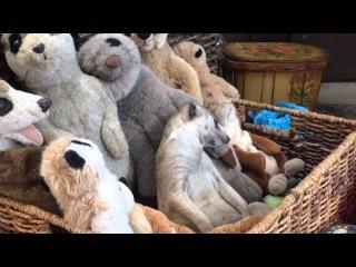 Сонный сурикат в корзине с игрушками