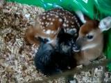 Оленёнок и котёнок