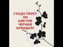 🌺ЧЕРНАЯ ОРХИДЕЯ. Существует ли цветок черная орхидея?🌺