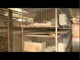 «Сельский порядок». Кролиководческий бизнес с нуля (8.07.2015)
