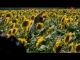 Спецотряд Шторм 04 серия 2013 (1)