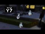 Мадагаскарские пингвины - Запутавшиеся в сети