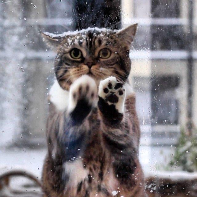 Мерзнут ли кошкины лапки зимой?