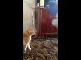 кот убийца прикол не зли кота смотреть до конца смешно до слез