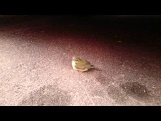 Маленький птенец на дороге