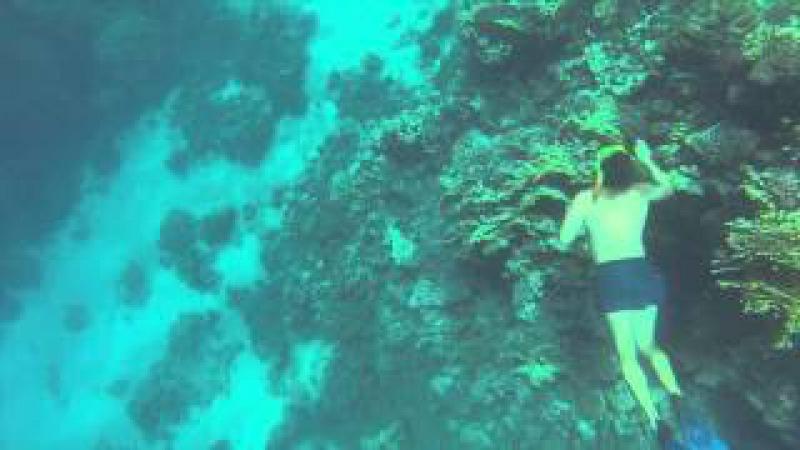 Подводный мир Красноморского края-)