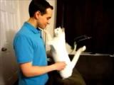 Кот любит обнимать своего хозяина