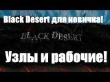 Black Desert для новичка, гайд - узлы и рабочие!