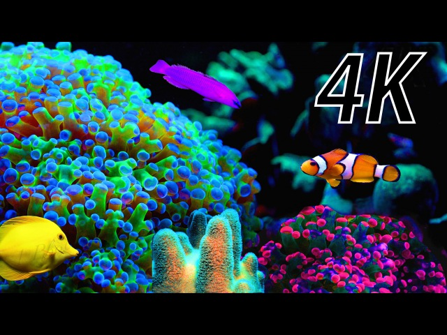 4K video coral aquarium