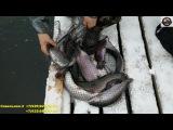 18 декабря рыбалка в Савельево-2 Пирогово