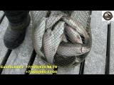 15 декабря рыбалка в Савельево-2 Пирогово