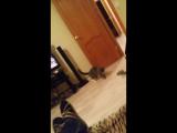 Шанти кот-нинзя