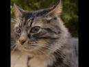 Кот охуенен