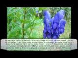 Самое ядовитое растение в мире