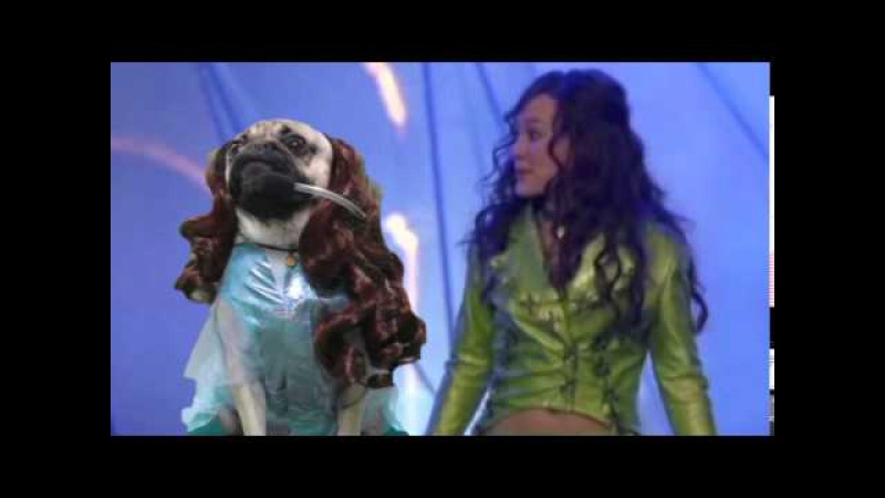 Doug The Pug - Lizzie McGuire