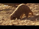 National Geographic Убийственная скорость Саванна