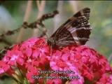 TRBelgeselizle.com_The Private Life of Plants - 03 - Flowering