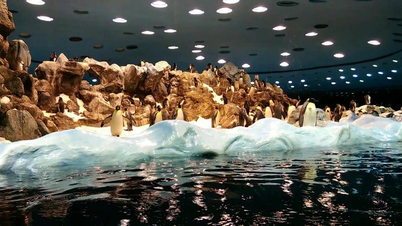 Лоро Парк - Королевские и Снэрские пингвины
