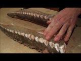 Рецепт копчения осетра (любой рыбы) в домашних условиях