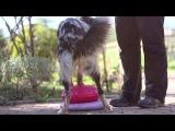 Doggone Jollys Hakuna Matata - TAABU ♡ [6months]