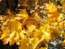 Осень рыжая подружка