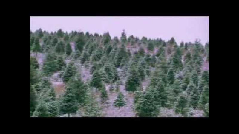 Месть елок
