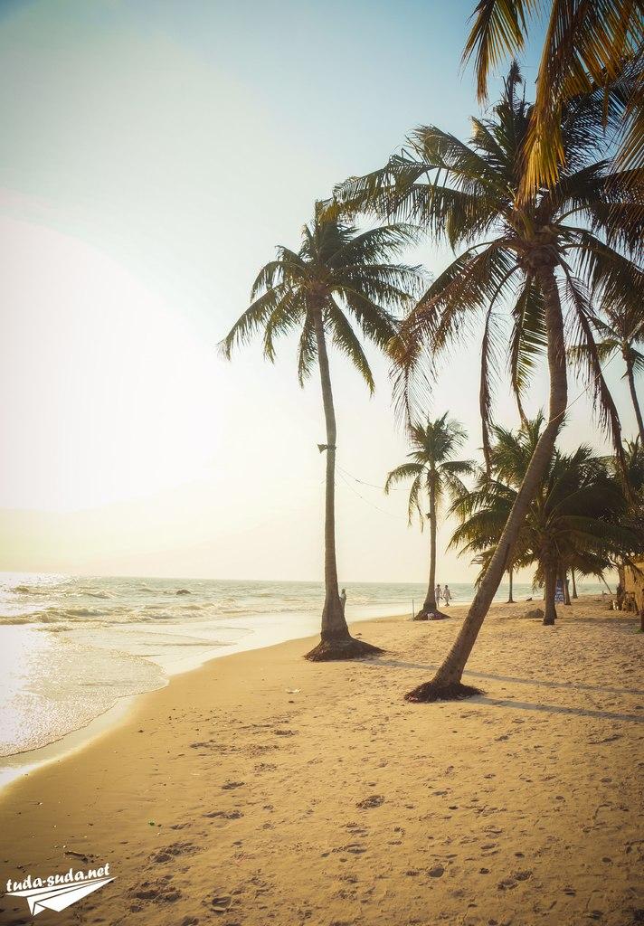 Пальмы на пляже фото