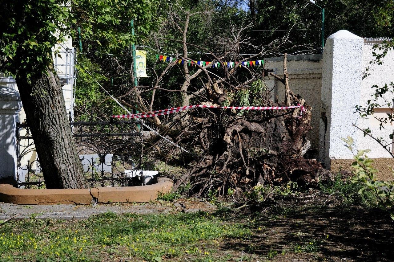 Центральный таганрогский парк имени Горького сильно пострадал после урагана и потерял редкие породы деревьев