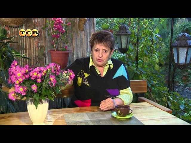 Хризантема - Цветочная лавка