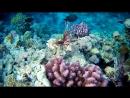 Рыбы зебры и вся красота красного моря_1